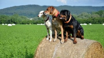 <thrive_headline click tho-post-8243 tho-test-247>I 10 Migliori Localizzatori GPS per Cani, Gatti e Animali Domestici</thrive_headline>