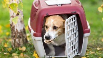 I 10 Migliori Trasportini per Cani di Tutte le Taglie