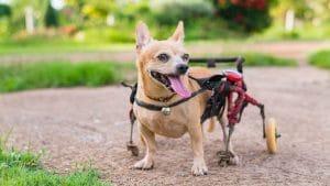 miglior carrello per cani disabili