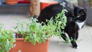 miglior repellente per gatti