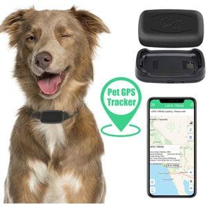 Zebbyee GPS per Animali Domestici